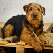 Hunde Fotoshooting Kassel