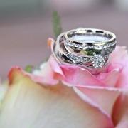 Hochzeitsfoto Ringe auf Rosen gebettet